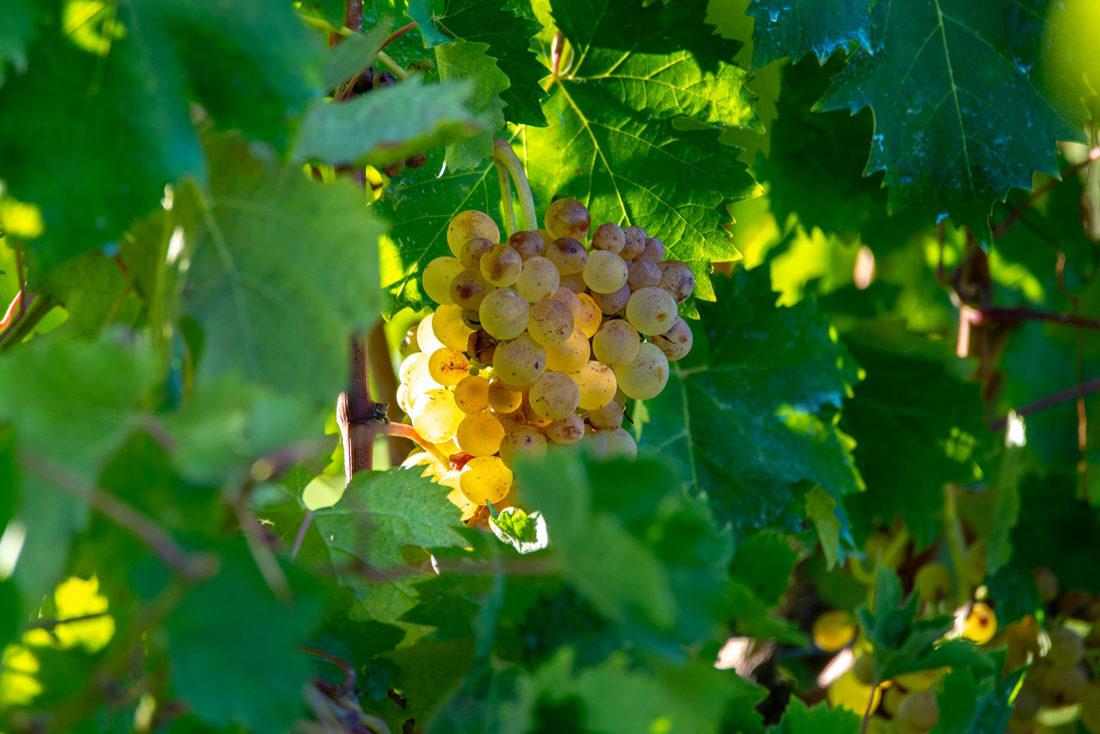 Degustazione di vino in Liguria